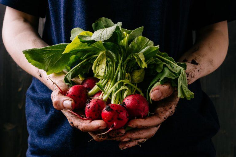 Das Pflanzen von Gemüse und Sommerblumen