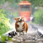 5 Tipps für einen gesunden Hund